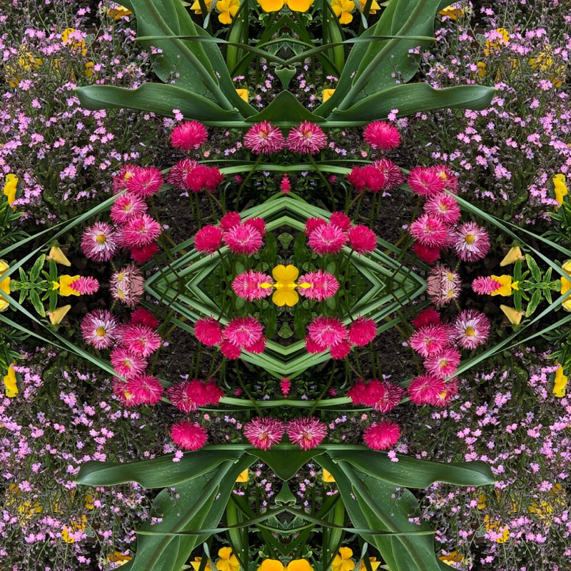 A symmetrical, altered photo of wildflowers in a garden, features hot pink, yellow and tiny purple flowers.